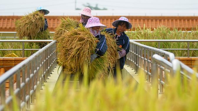 OMG, China Bans GMO