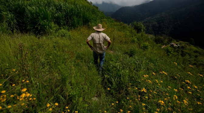 """How GMO Seeds and Monsanto/Bayer's """"RoundUp"""" are Driving US Policy in Venezuela"""